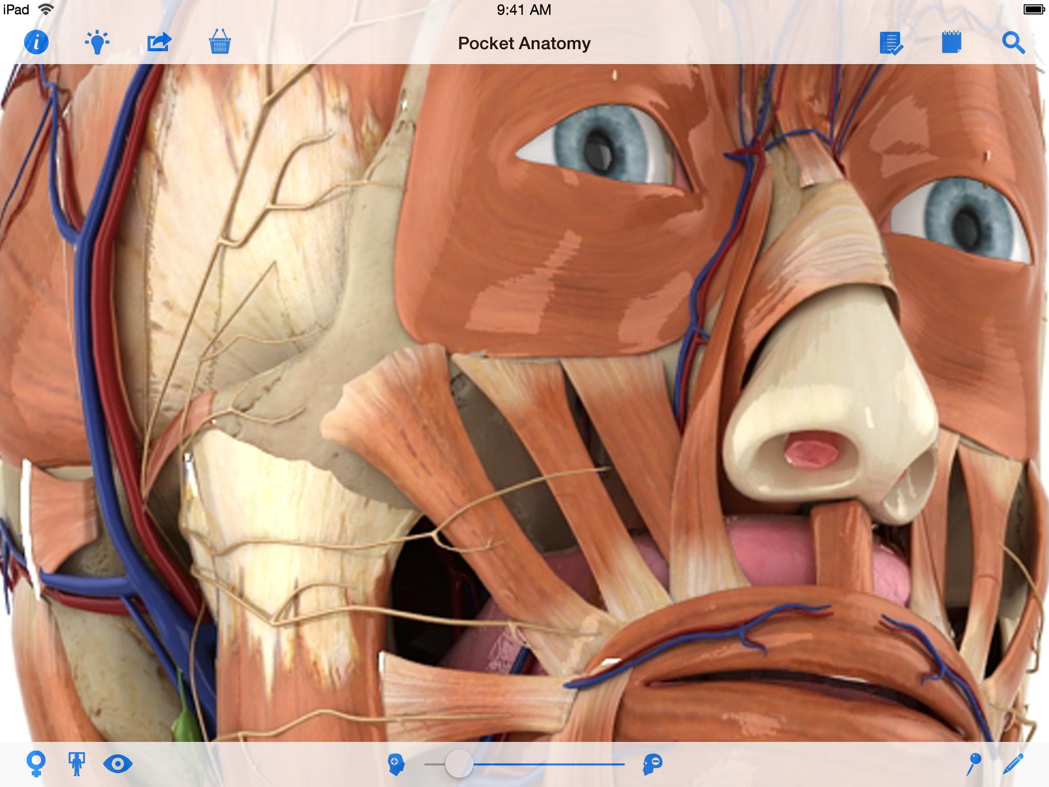 Fantastisch 3d Human Anatomy And Physiology Bilder - Menschliche ...